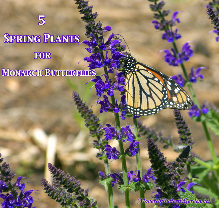 5 Spring Plants That Could Save Monarch Butterflies