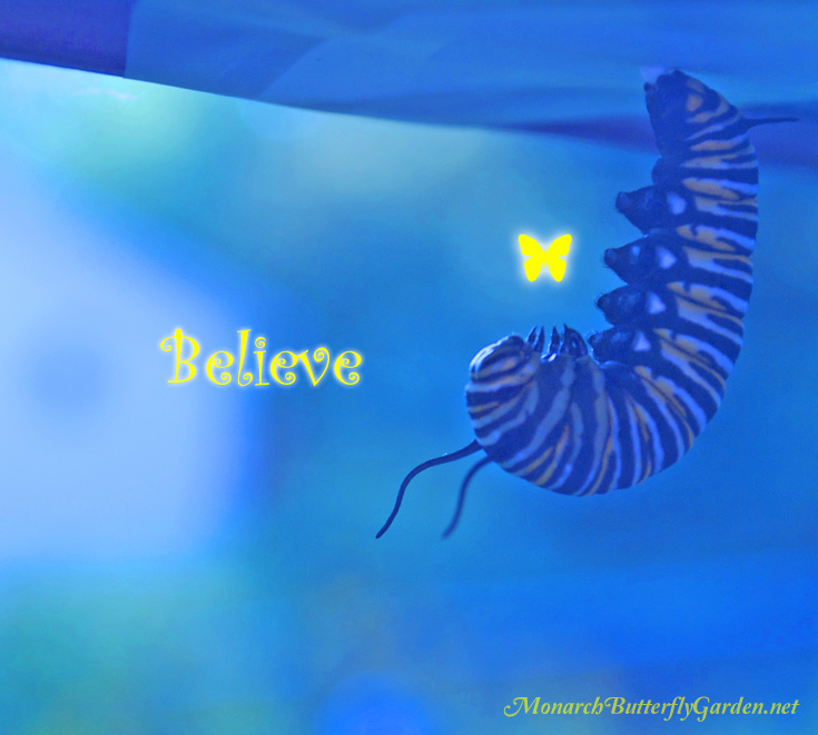 Inspirational Quote from a Monarch Caterpillar- Believe