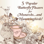 5 Popular Butterfly Flowers for Monarchs...and Hummingbirds!